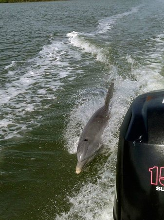 Island Gypsy Excursions: A couple of dolphins followed our boat for several minutes!