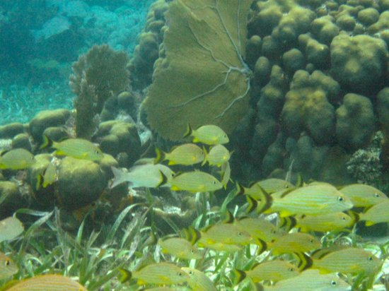 San Pedro, Belize: more fish