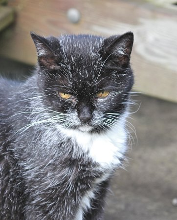 Tom's Barn and Douglas's Barn: Boots- the Orchard Farm cat
