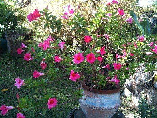 Dea's Gardens Guest House: Flowers all around