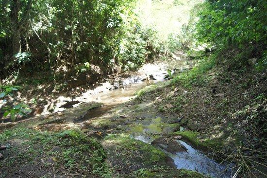 Ilog Maria Honeybee Farm: 奥にある小川 現地の子供がノーパンで水遊びをしてます