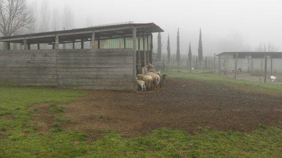 Relais Parco Fiorito: gli animaletti