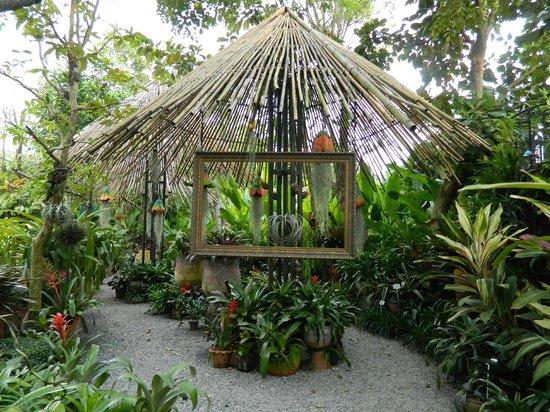 普吉岛植物园照片