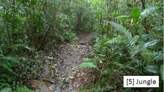 Lang Biang: [5] Jungle