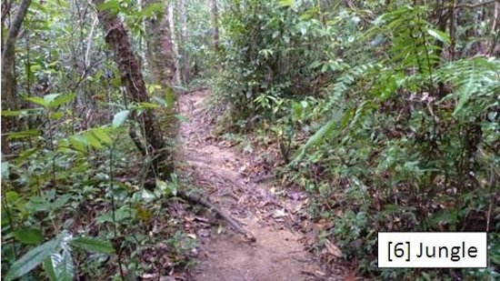 Lang Biang: [6] Jungle