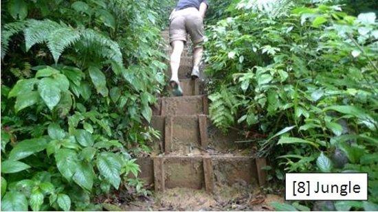 Lang Biang: [8] Jungle