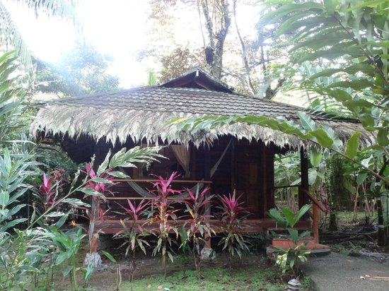 Cariblue Beach & Jungle Resort: Bungalow superior