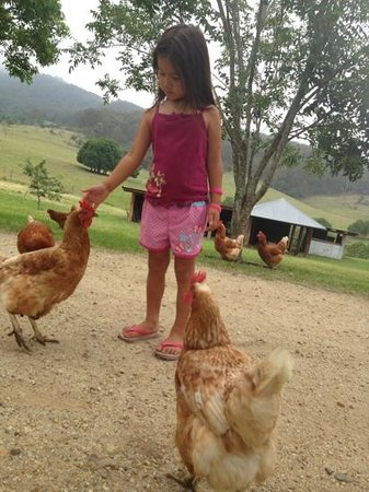 Lillydale Farmstay: loved the chickens!!!