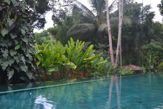 Uma by COMO, Ubud: Pool view