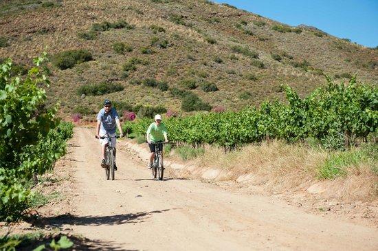 Van Loveren Family Cellar: Vineyard Moutain Bike Trail & rental bikes