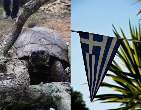 Vellianitatika Retreat: Resident Tortoise