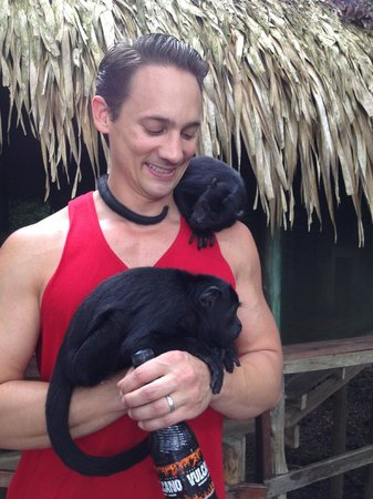 Juma Amazon Lodge: 2 baby howler monkeys being cared for at the lodge