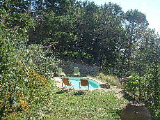 Villa Mina: giardino-piscina