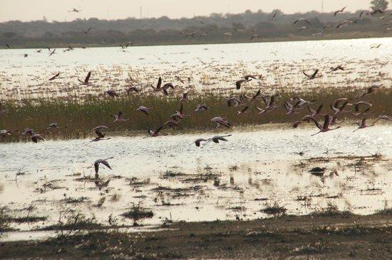 Maropeng Boutique Hotel: lesser flamingo's