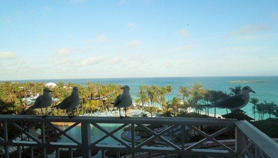 Atlantis, Beach Tower, Autograph Collection: Oceanview - gorgeous