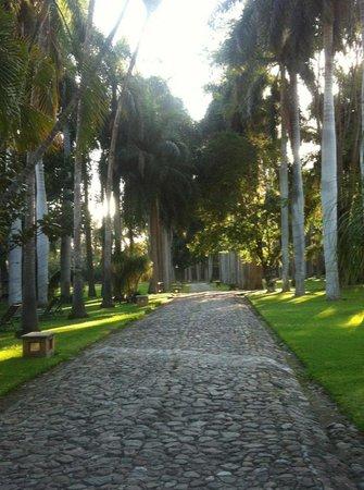 Hacienda San Gabriel de las Palmas : Camino a la hacienda