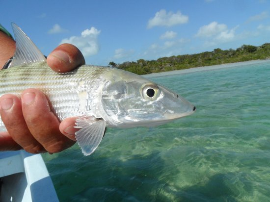 El Pescador Resort: Bonefish.