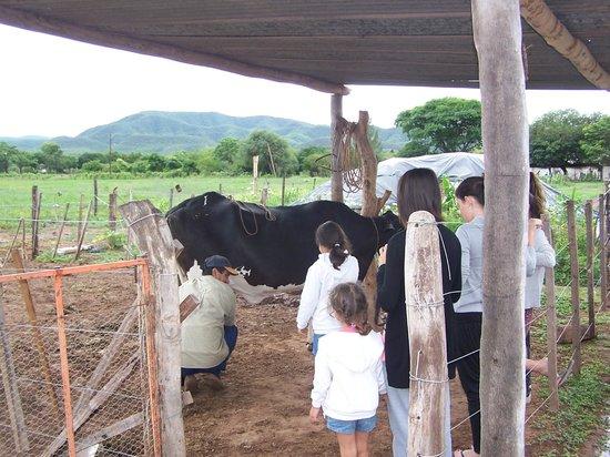 La Posada de Juan: Ordeñe de vacas