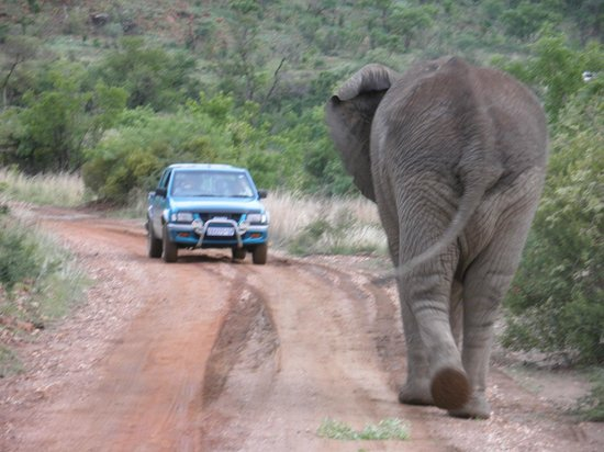 Tshukudu Bush Lodge: Glad we were behind it not in front!