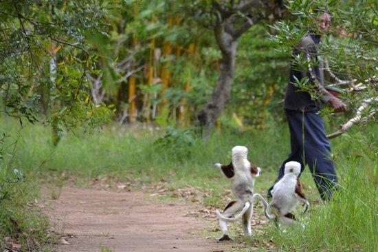 Lemurs Park : Lemur's Park, Antananarivo