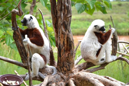 Park Lemurów