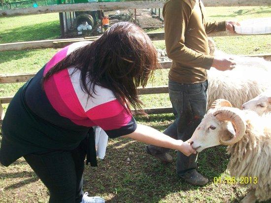 Hotel Kimberly: Feeding the lambs