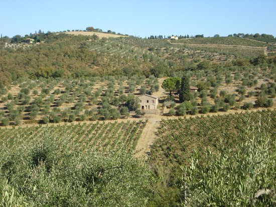 Montebuoni: View of the Chianti Vineyards