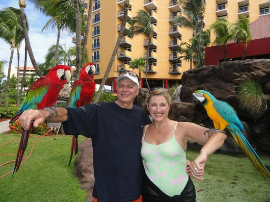 Hilton Aruba Caribbean Resort & Casino: We love to visit with the Parrots!