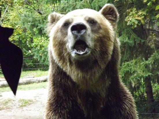 Toronto Zoo: feed me