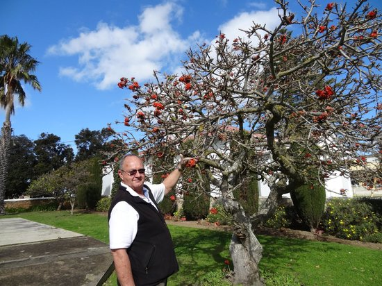 Western Cape Tours -  Day Tours: Lovely Dave, giving me informations about this interesting tree...