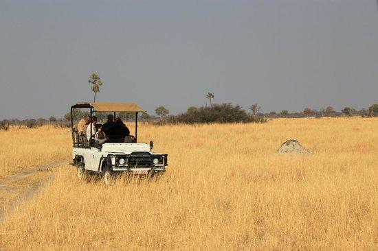 Wilderness Safaris Davison's Camp: site