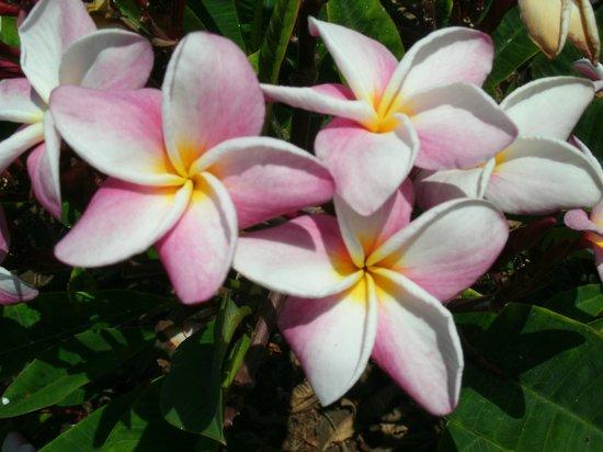 Maui Sunseeker LGBT Resort: lovely landscaping 