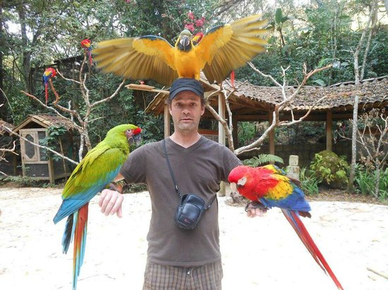Macaw Mountain Bird Park & Nature Reserve : My son Daniel covered in macaws at the interactive centre at Macaw Mountain