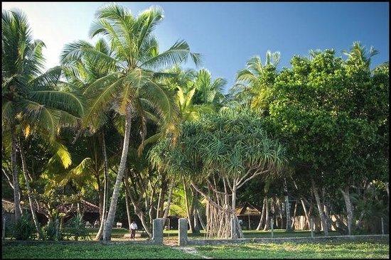 Mawella Beach Resort: вид с пляжа на Manahara Cabanas