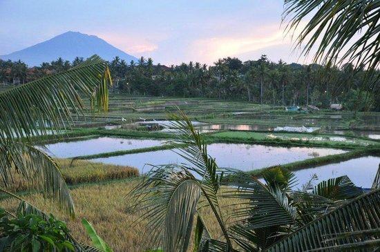 Alam Jiwa: View from room balcony