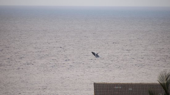 Aston Kaanapali Shores: Whale watching from our balcony