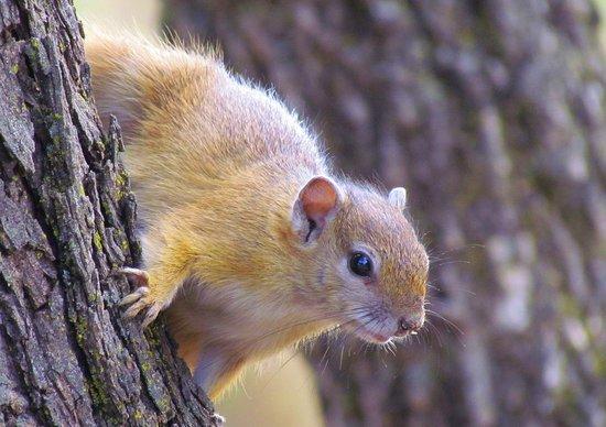 Mon Repos Guest Farm: Squirrel
