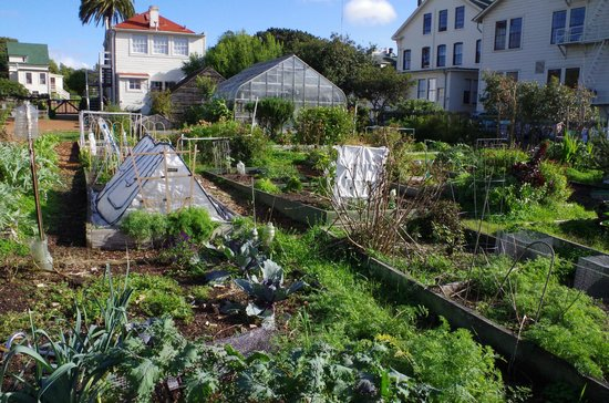 The Real S.F. Tour: Community garden