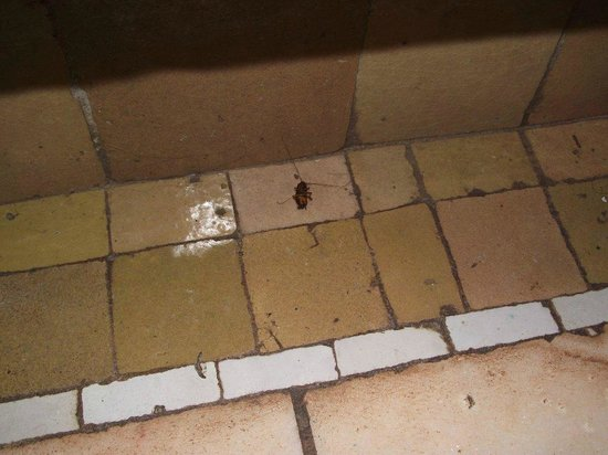Palmeraie Village Residence : cockroach in kitchen