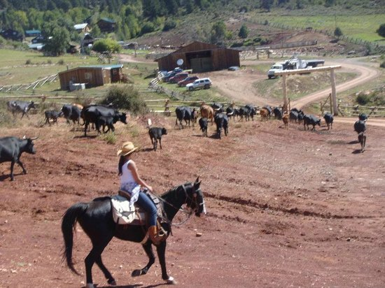 Black Mountain Ranch: The Cattle Drive