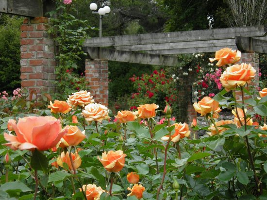 Queens Park Motels: Queens Park Rose Gardens