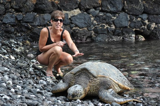Makena Beach & Golf Resort:                   turtles on the beach at Makena