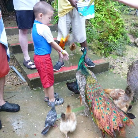 Turtle River Falls and Gardens: All kinds of feathered friends are here