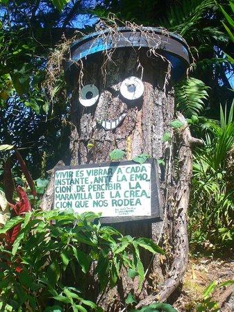El Explorador Gardens: buen consejo Sr. Arbol