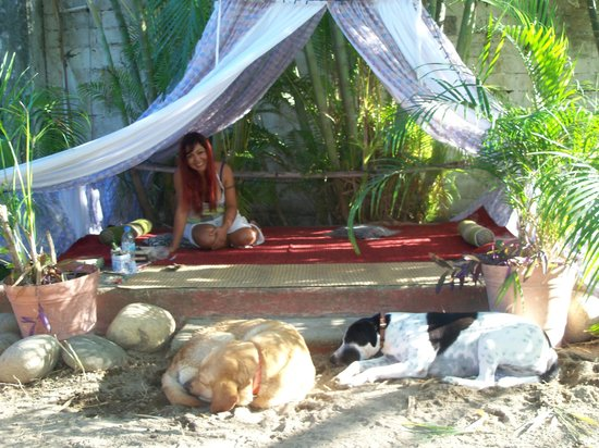 El Rincon del Viajero: Mali under the canopy with two guardians (Kudra on the right is mine, Troy a lovable lab is resi