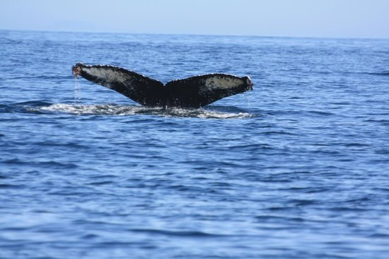 Whale Watching Boat Tours Victoria Australia