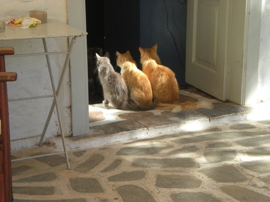 Hotel Mistral: Beautiful cats of Hydra