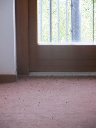 Le Verger des Chateaux : dead flies on the floor in the hallway…