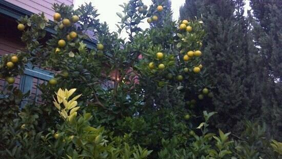 Habitat Suites Hotel: Oranges