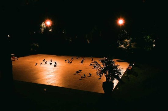 Bahia Resort Hotel: Ducks on the Shuffleboard Court